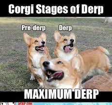 hurr corgi